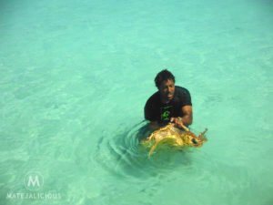 Isle of Pines Turtles - Matejalicious Travel and Adventure
