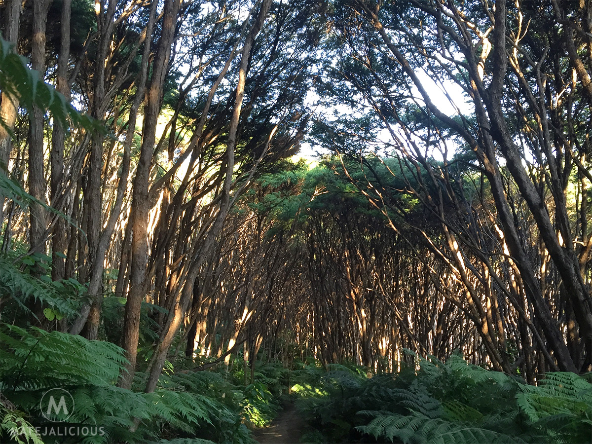 Coromandel Walkway Native Forest - Matejalicious Travel and Adventure