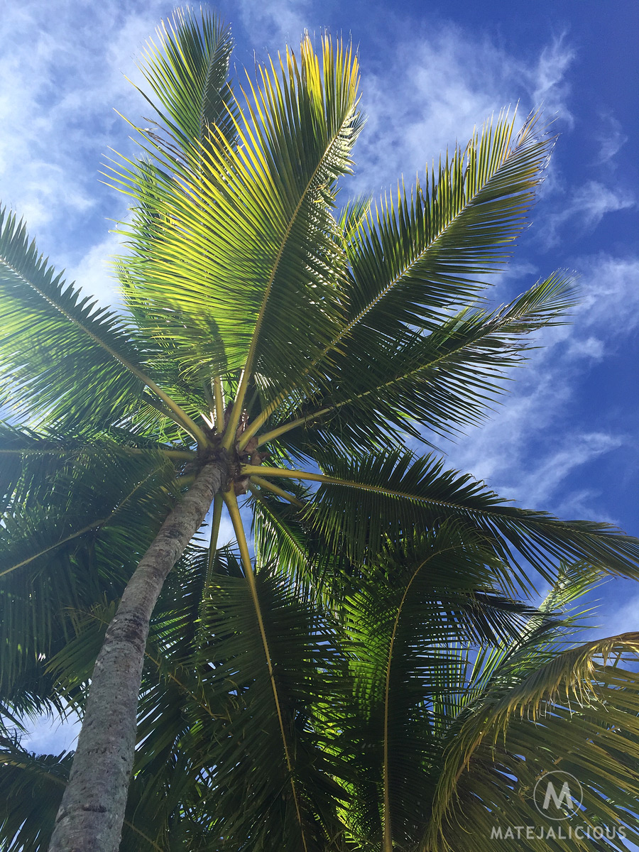 Coconut Palms Tahiti - Matejalicious Travel and Adventure