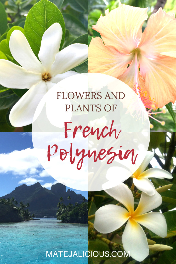 Flowers and plants of French Polynesia - Matejalicious Travel and Adventure