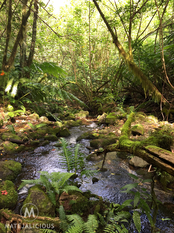 Forest Stream Rarotonga - Matejalicious Travel and Adventure