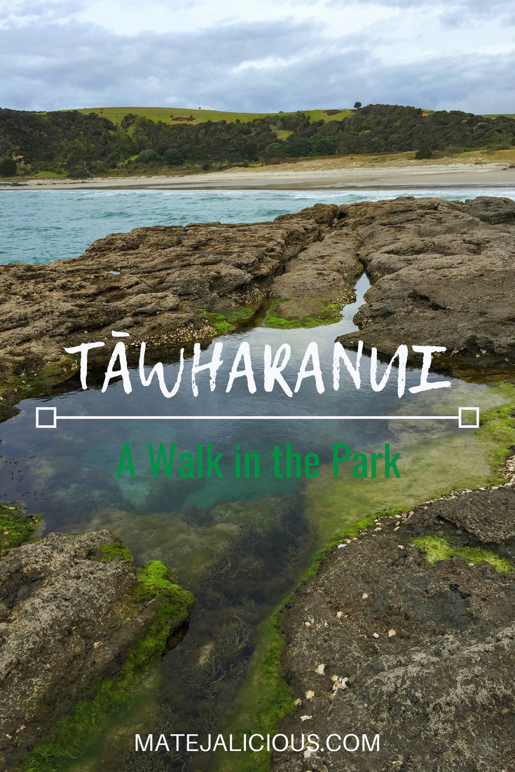 Tawharanui - a walk in the park - Matejalicious Travel and Adventure