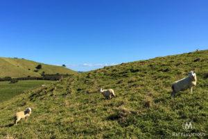 Tawharanui Open Sanctuary - Matejalicious Travel and Adventure