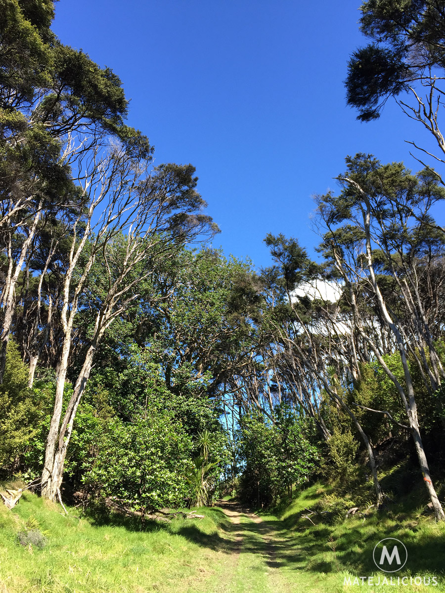 Tawharanui Park Hiking - Matejalicious Travel and Adventure