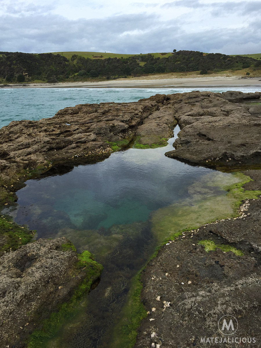 Tawharanui Rock Pools - Matejalicious Travel and Adventure
