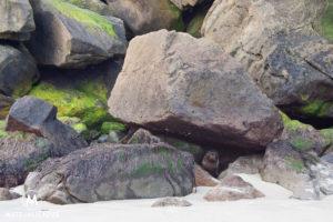Fur Seals Dunedin - Matejalicious Travel and Adventure