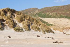 Sea Lions Otago Peninsula - Matejalicious Travel and Adventure