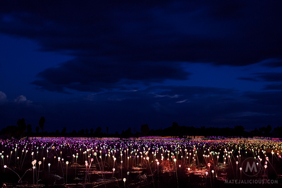 Field of Light - Matejalicious Travel and Adventure