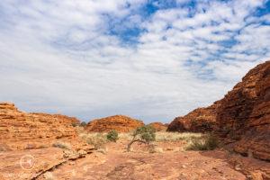 Kings Canyon Walk - Matejalicious Travel and Adventure