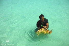 Isle Of Pines Turtles Featured - Matejalicious Travel and Adventure