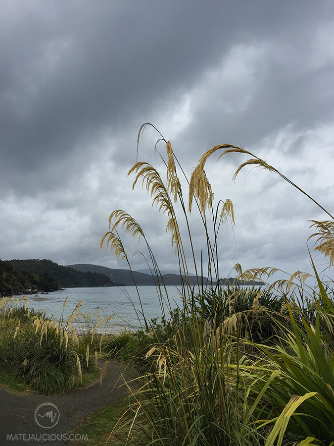 Rakiura Track - Matejalicious Travel and Adventure