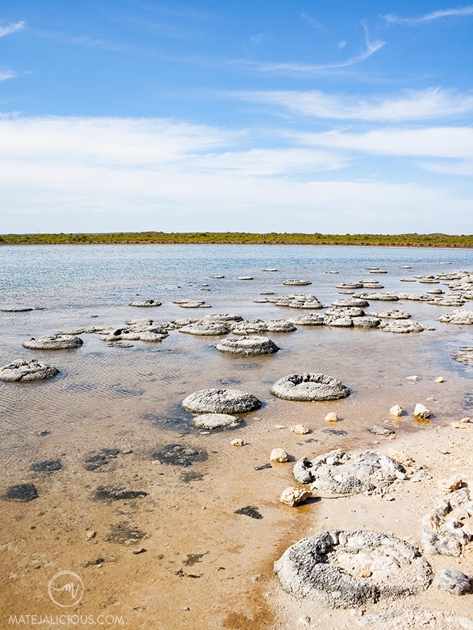 Stromatolites Western Australia - Matejalicious Travel and Adventure