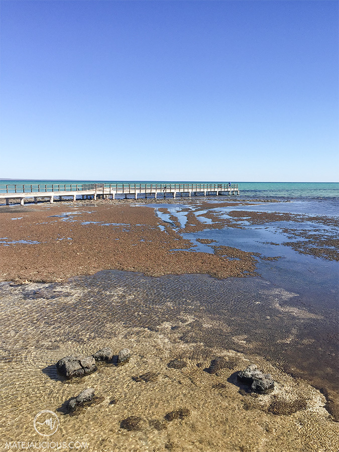 Stromatolites Shark Bay - Matejalicious Travel and Adventure
