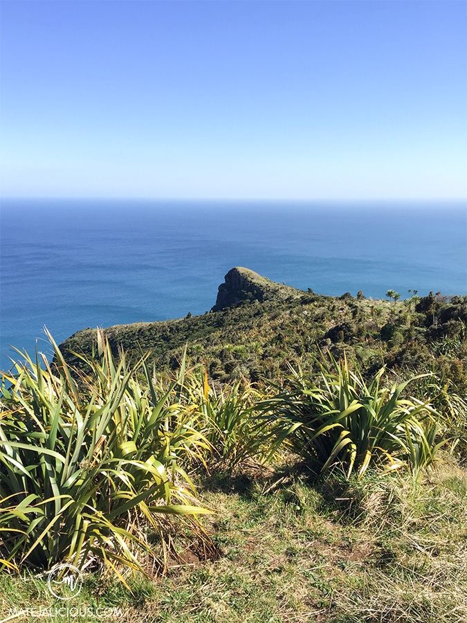 Maunganui Bluff Hike - Matejalicious Travel and Adventure