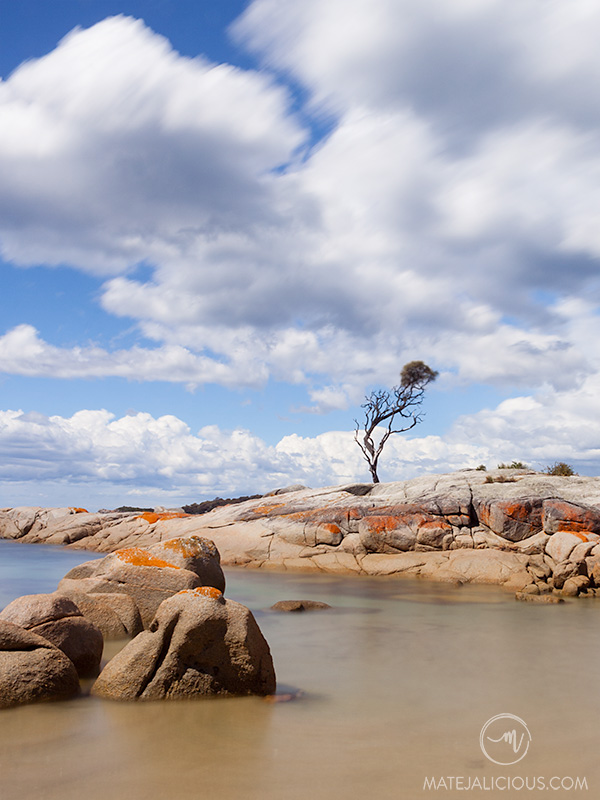 Lone Tree Bay of Fires - Matejalicious Travel and Adventure